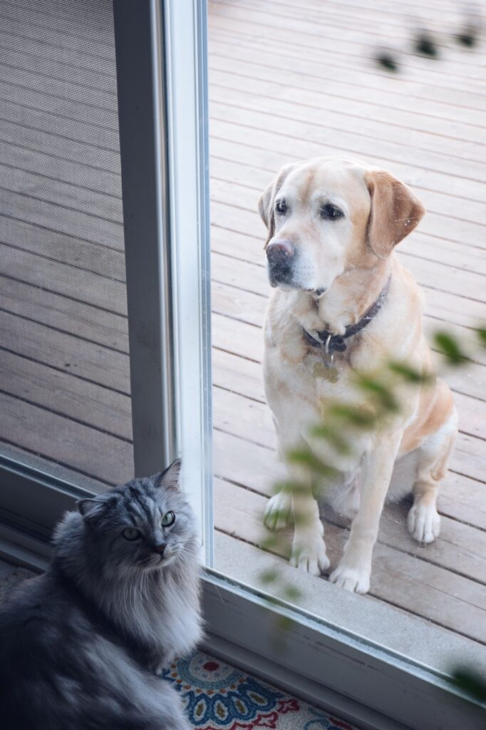 Dog wants to come inside, cat wants to go outside. Both sitting by the patio door waiting.
